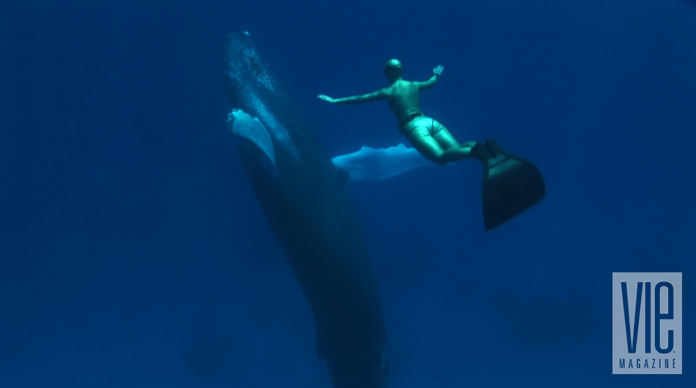 the cove documentary torchlight film series seaside repertory theatre World Champion Freediver Mandy-Rae Cruickshank and Humpback Whale in the Dominican Republic