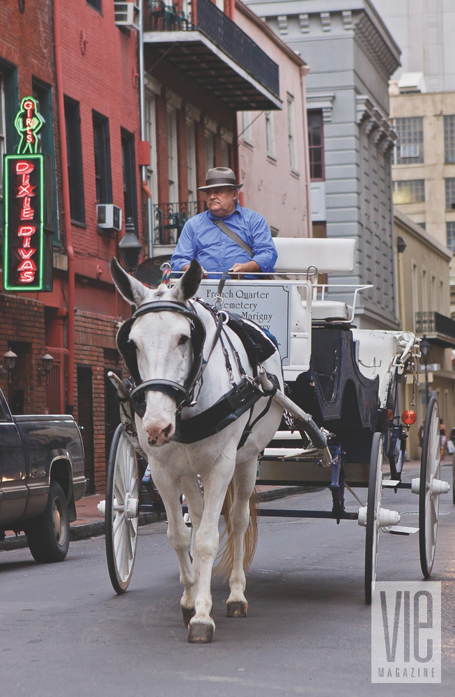 New Orleans Revived horse carriage
