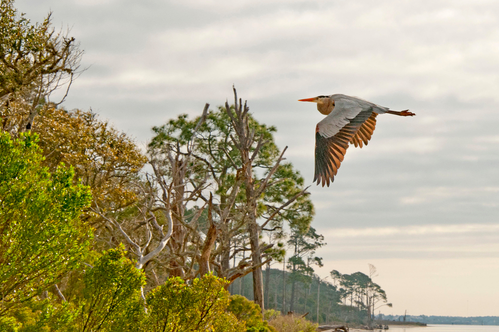 Coastal Guardians Gulf Islands National Seashore VIE Magazine Florida Fort Walton Beach Mississippi