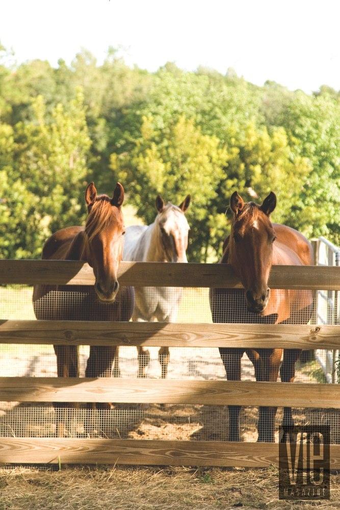 Vie Magazine Alaqua Animal Refuge horses