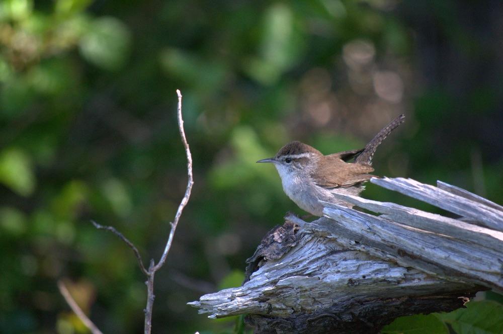 Bird sitting on branch in California