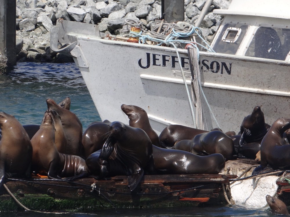 Seals sitting on dock