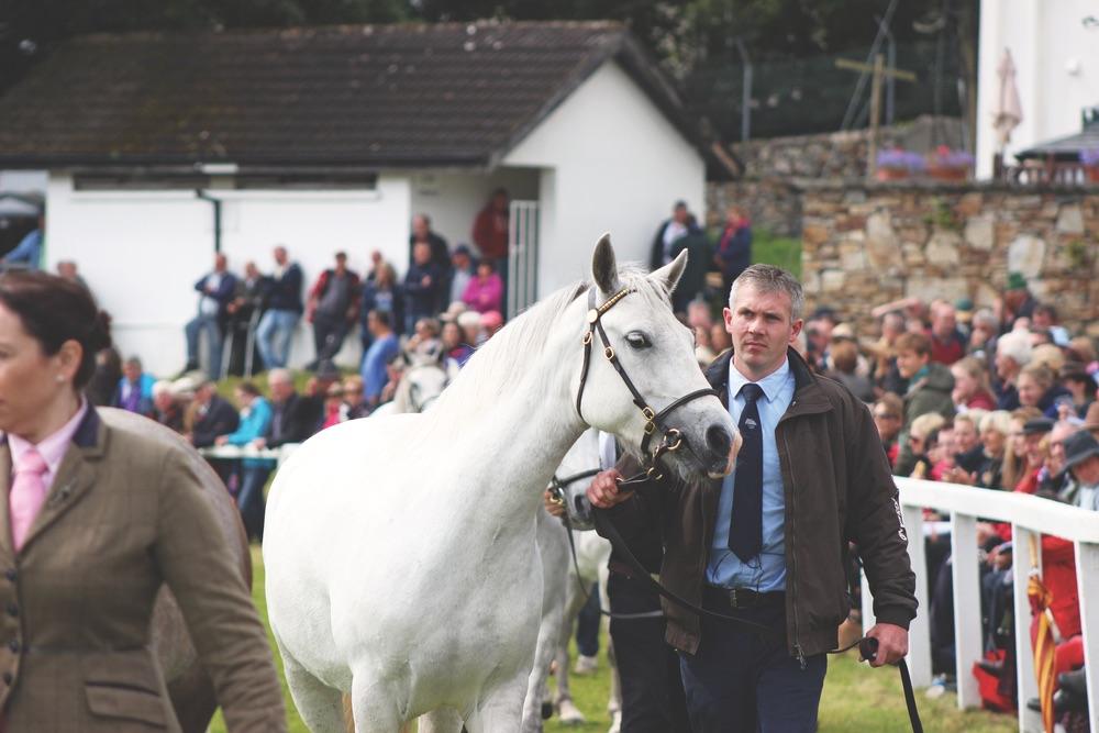 Ireland, Connemara national park, Horse, Connemara Life, Connemara Pony Festival