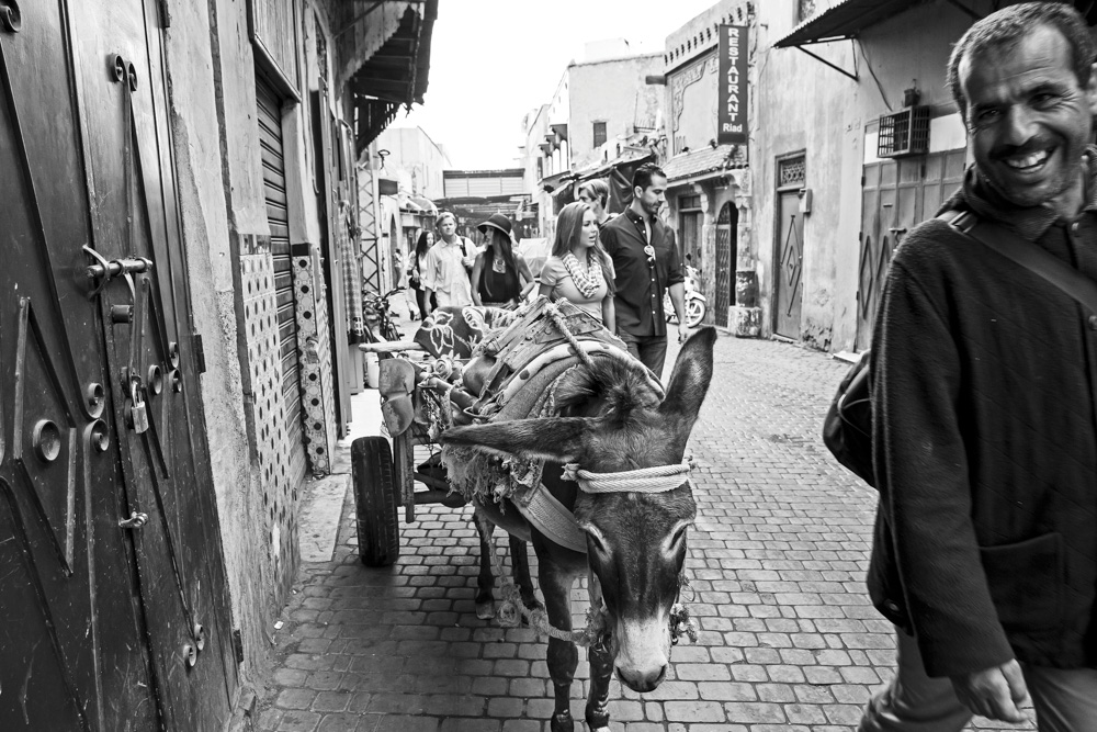 Donkey pulling cart on the streets of Morocco