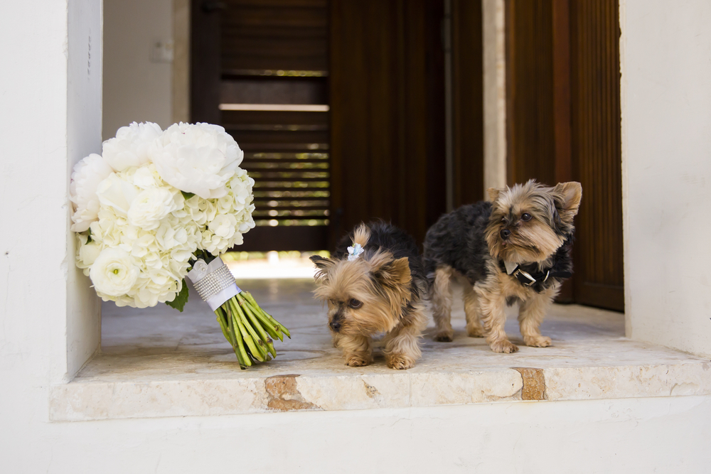 dogs and flowers in a wedding