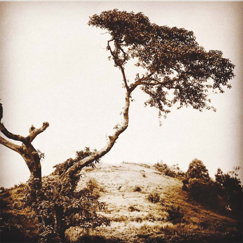 photograph of a tree