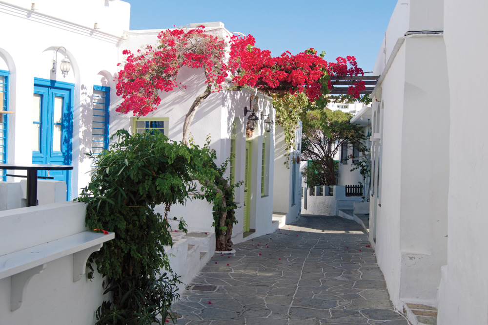 Side street with white buildings, blue trim and red blossoms on tree
