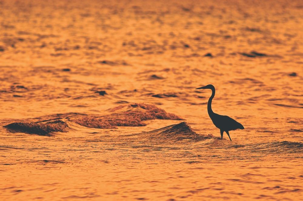 Crane standing in water