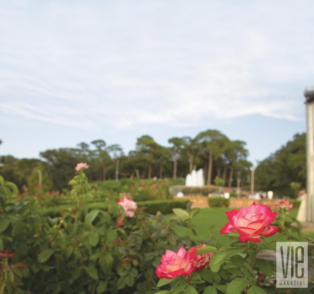 Flowers in a garden in Fairhope, Alabama