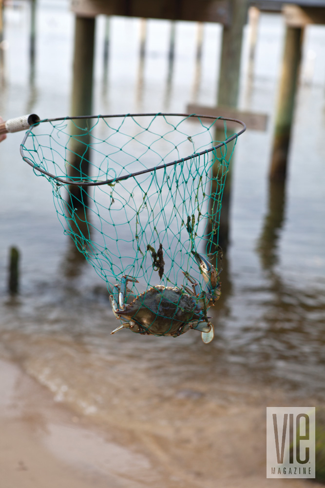 Catching crab in a net in Fairhope, Alabama