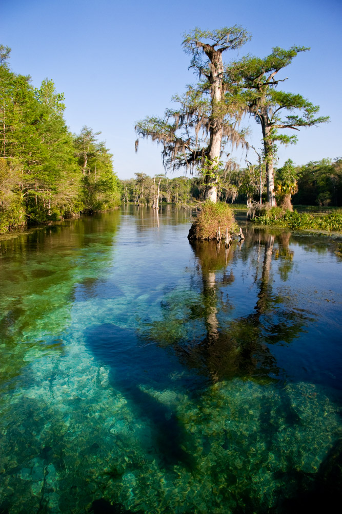 Crystal clear water with trees