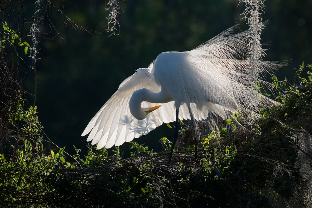 white crane on the springs of florida