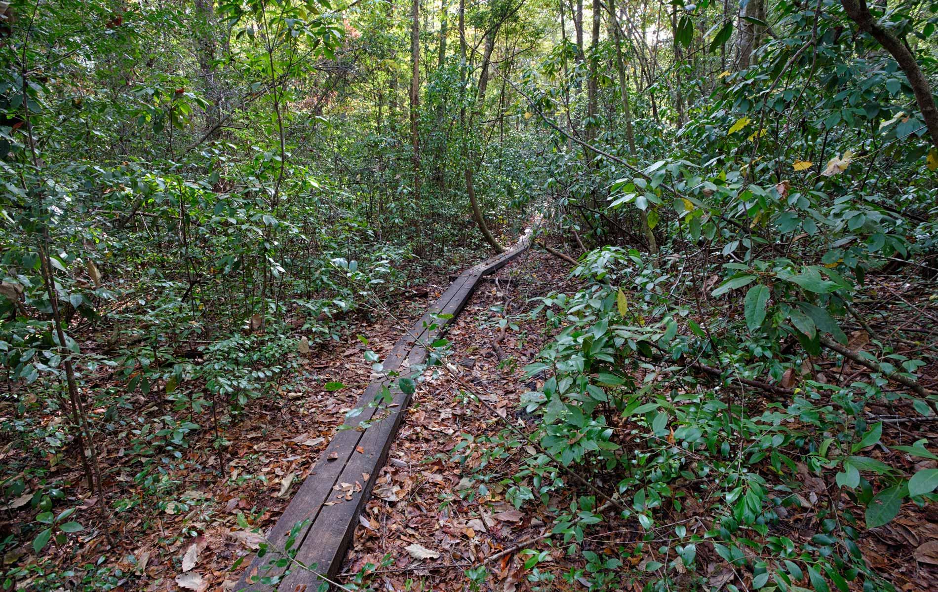 vie-magazine-florida-trail