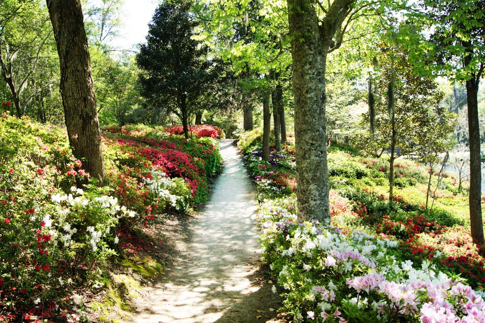 path lined with flowers