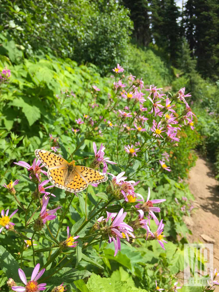 Butterfly and flowers orange and purple in Montana Jewel Basin