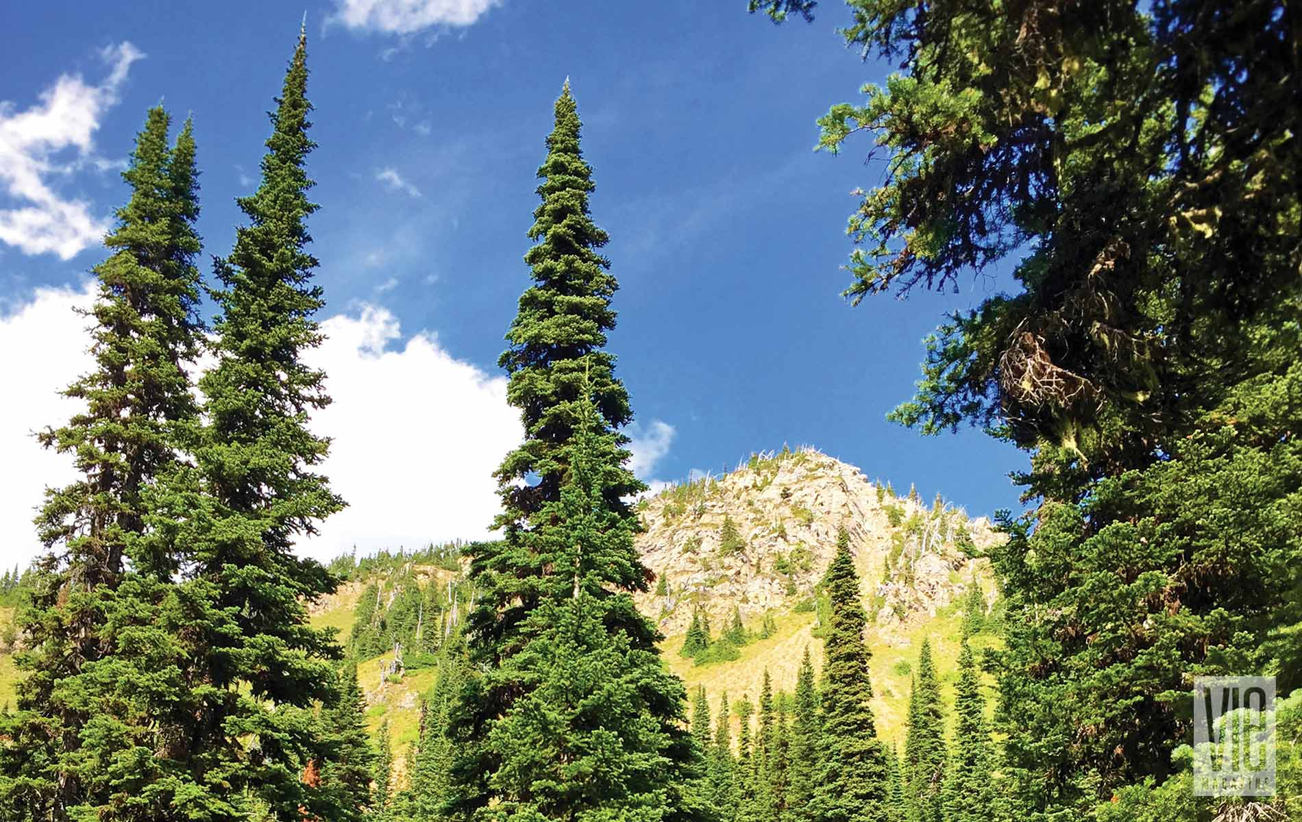 Trees and mountains in Montana Jewel Basin