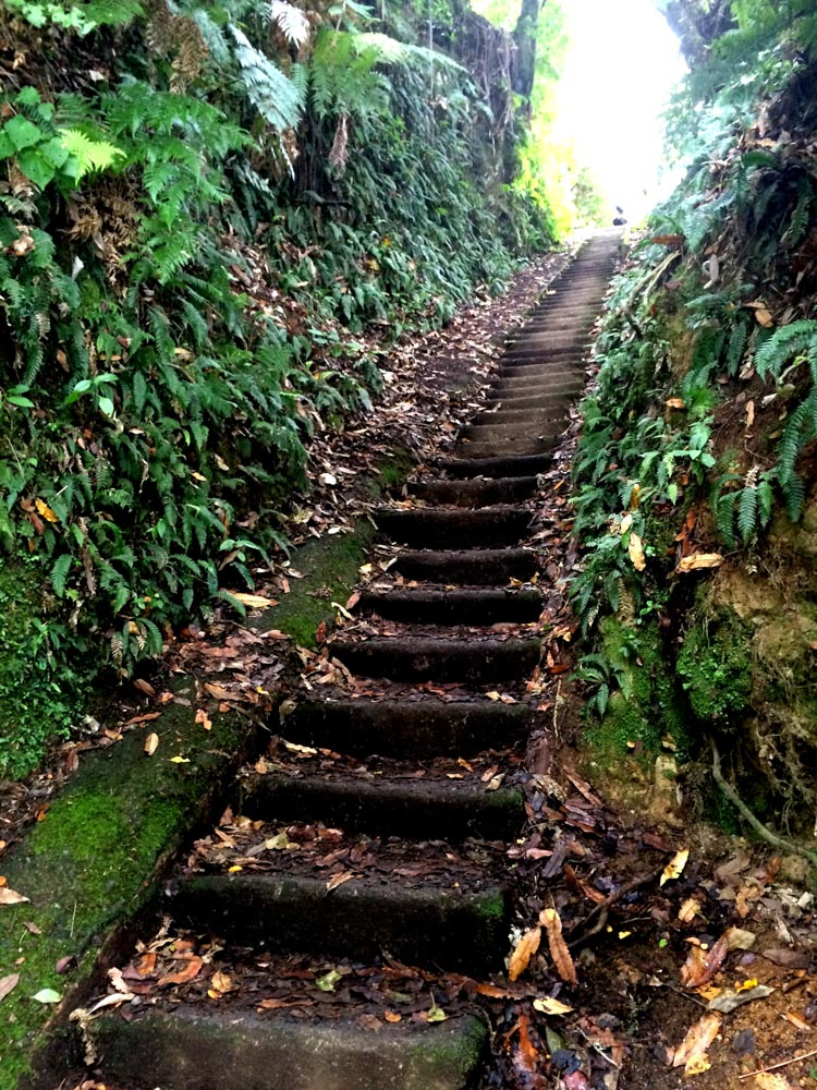 Steps to Okere Falls, Rotorua, New Zealand