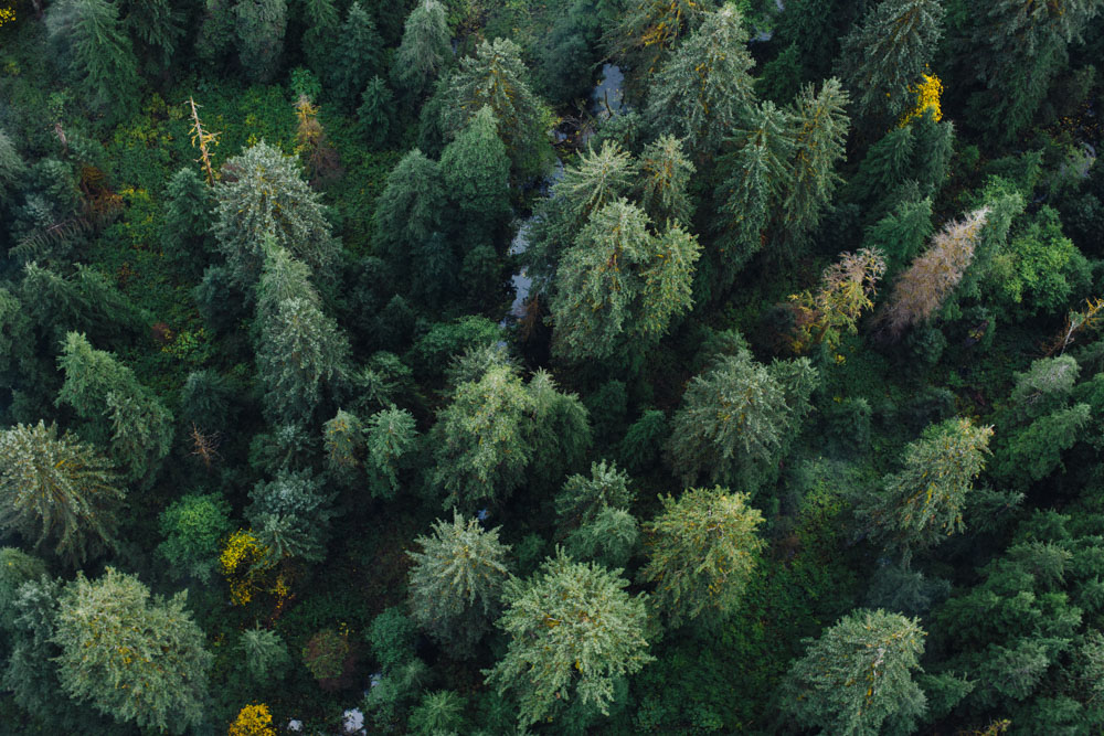 Aerial view of lush trees in Vancouver Island, Canada