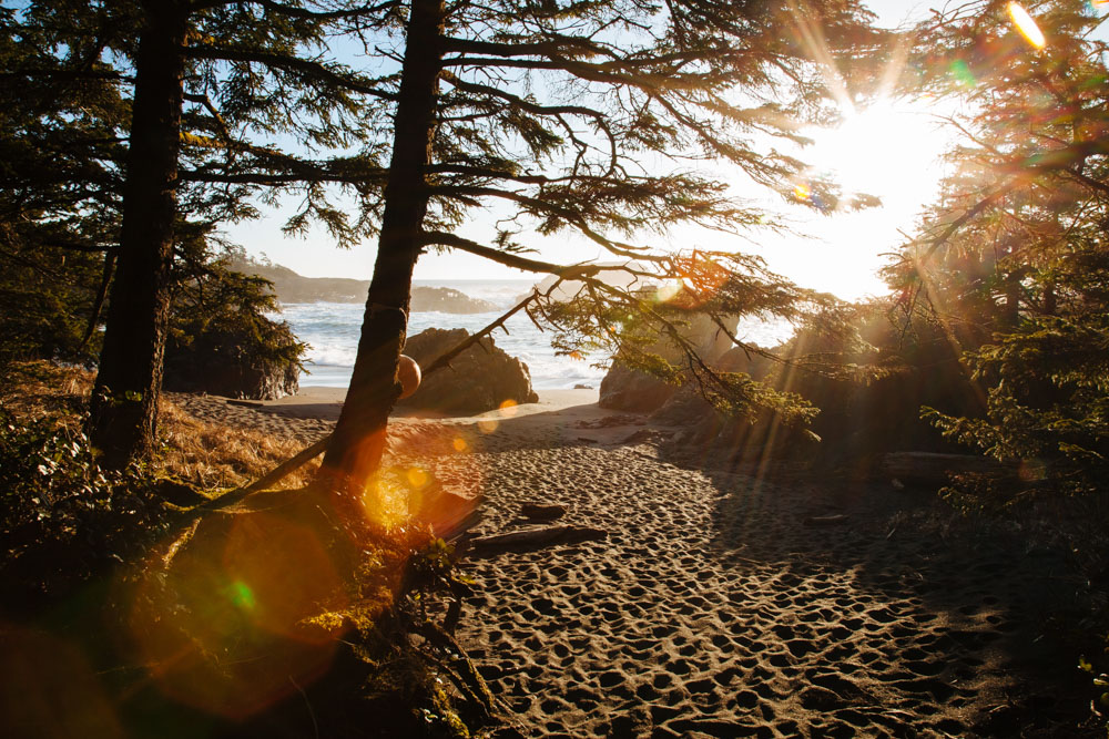 Secluded beach covered in trees at sunset in Vancouver Island, Canada