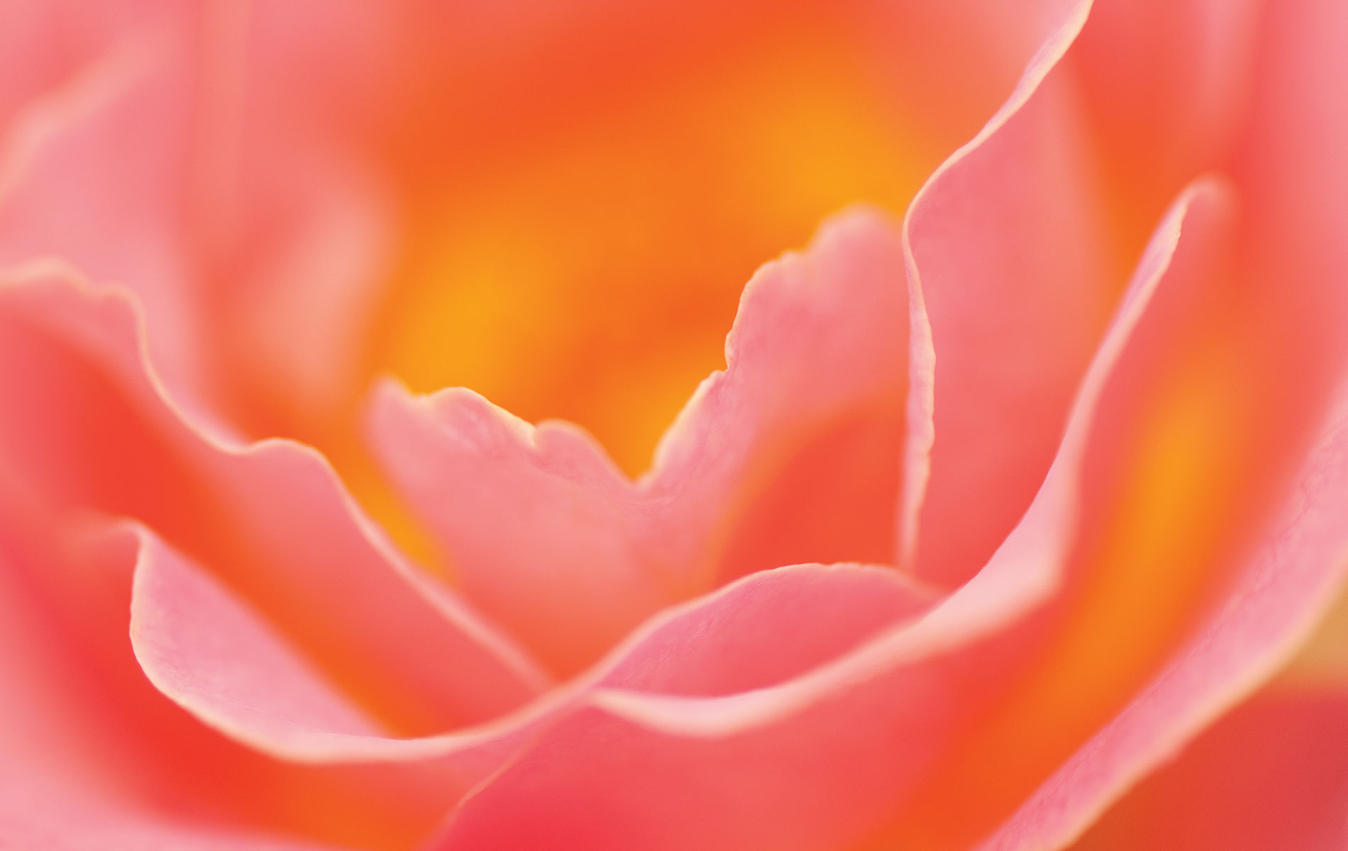 VIE Magazine Bellingrath Gardens pink and orange flower Photo by Troy Ruprecht