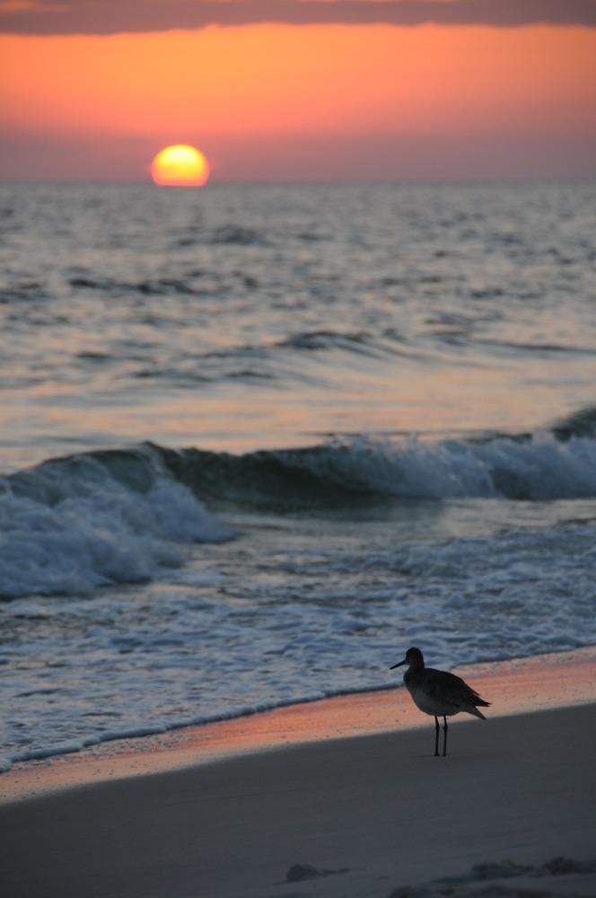 vie magazine pioneering real estate market northwest florida the beach group