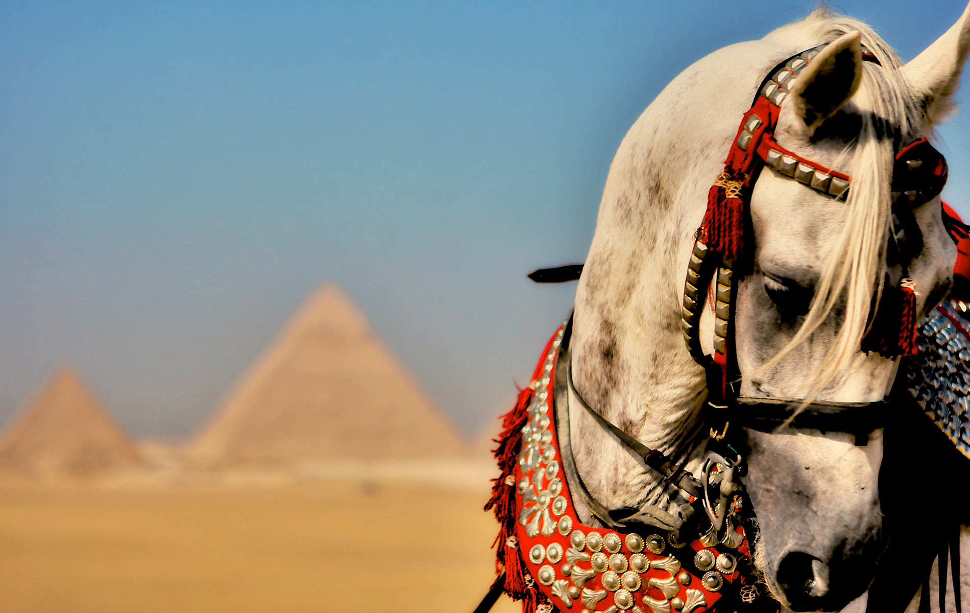 vie-magazine-egypt