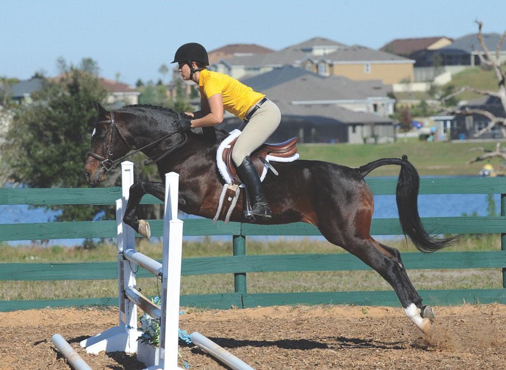 Horse jumping at Al-Marah