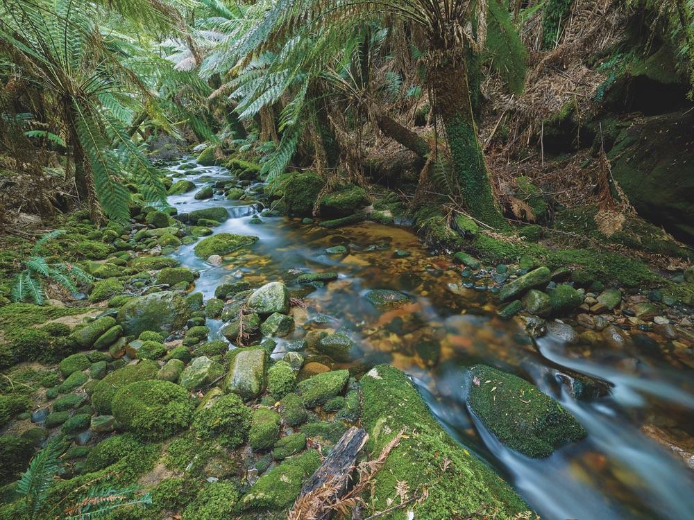 Rain forest stream in the blue tier northeast highlands tasmania travel