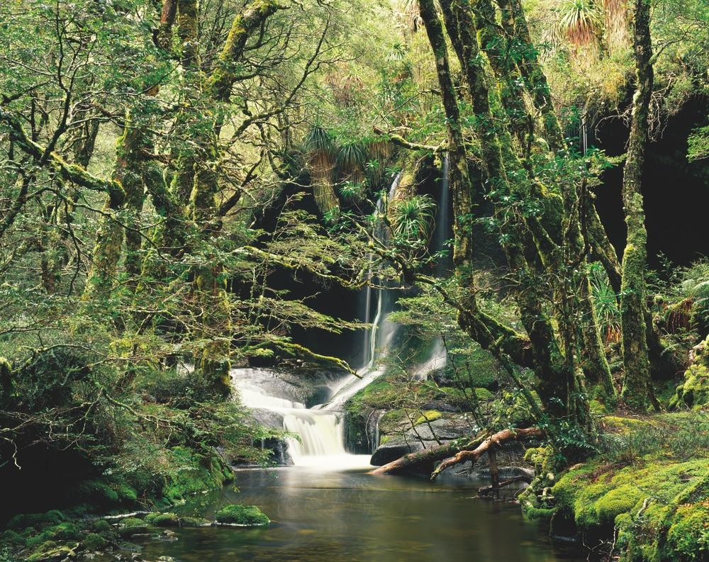 Highland Rain Forest Walls of Jerusalem National Park Tasmania Travel Waterfall