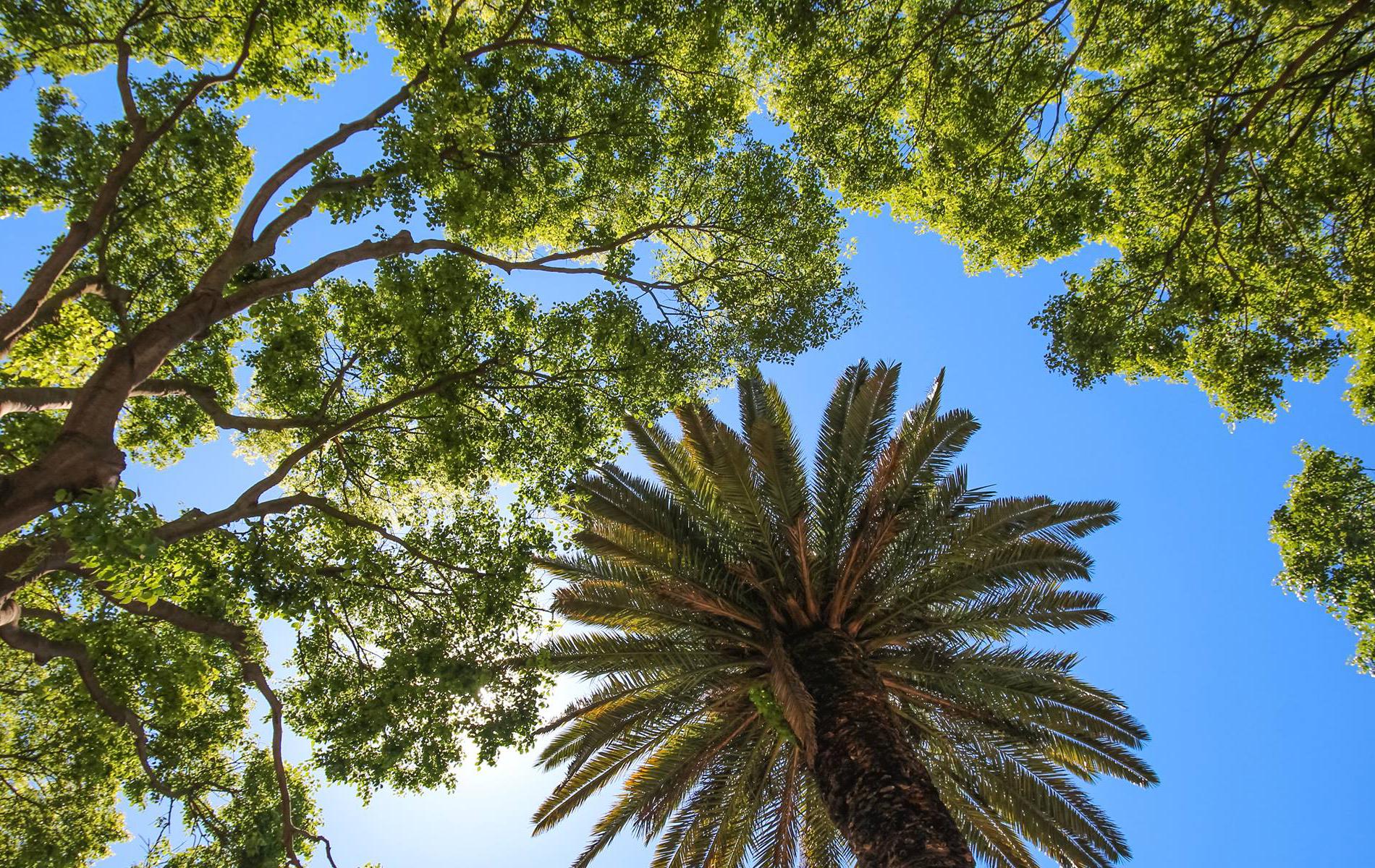 Green space in Destin Palm Trees courtesy of Trees Destin