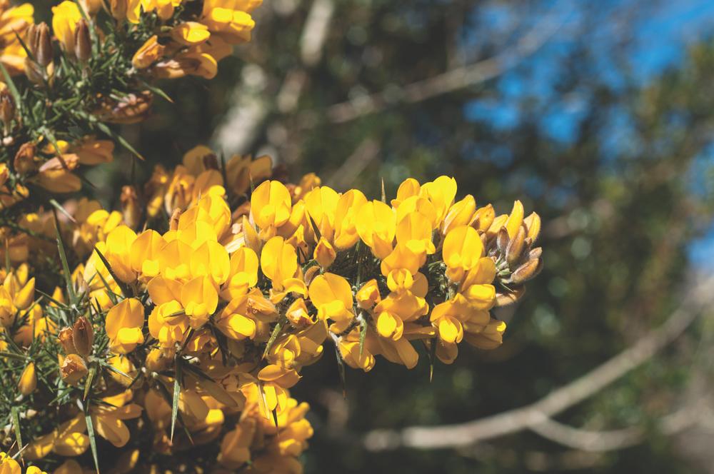 Flowers in Western Ireland Breaking Eggs Connemara Life