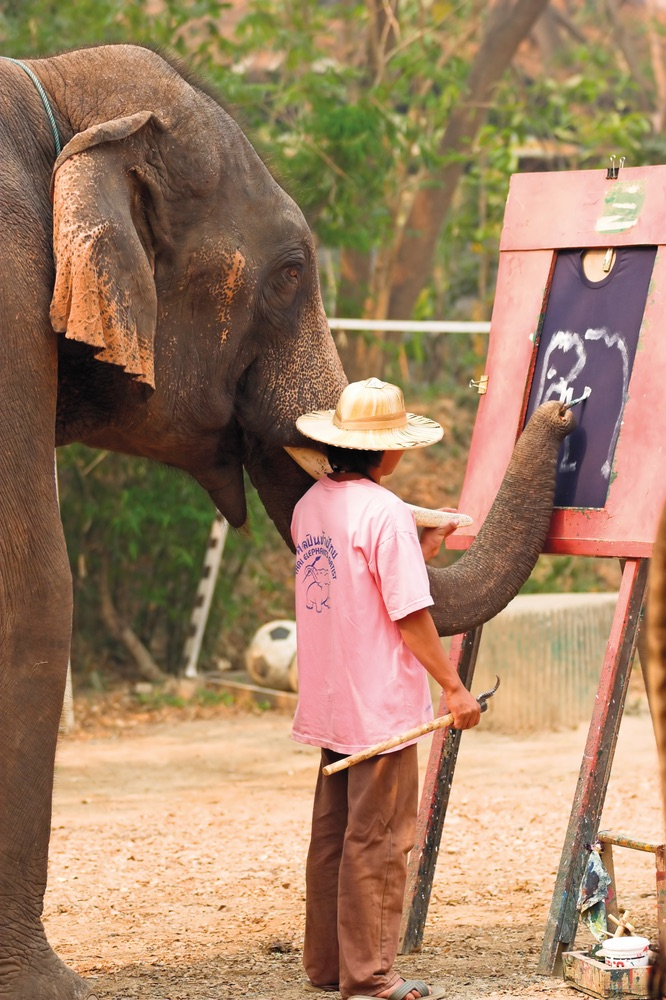 Vie Magazine An Asian elephant paints a self-portrait
