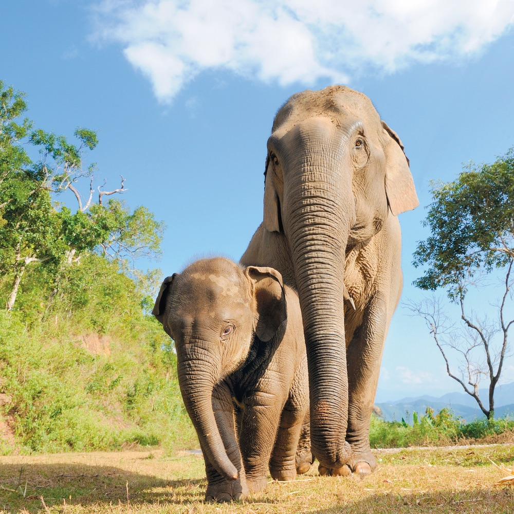 Vie Magazine, Baby and Mother elephant walking together