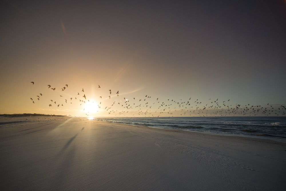 A flock of seagulls drifts across a radiant early-morning sky in Grayton Beach, Florida. Chandler Williams, Modus Photography.