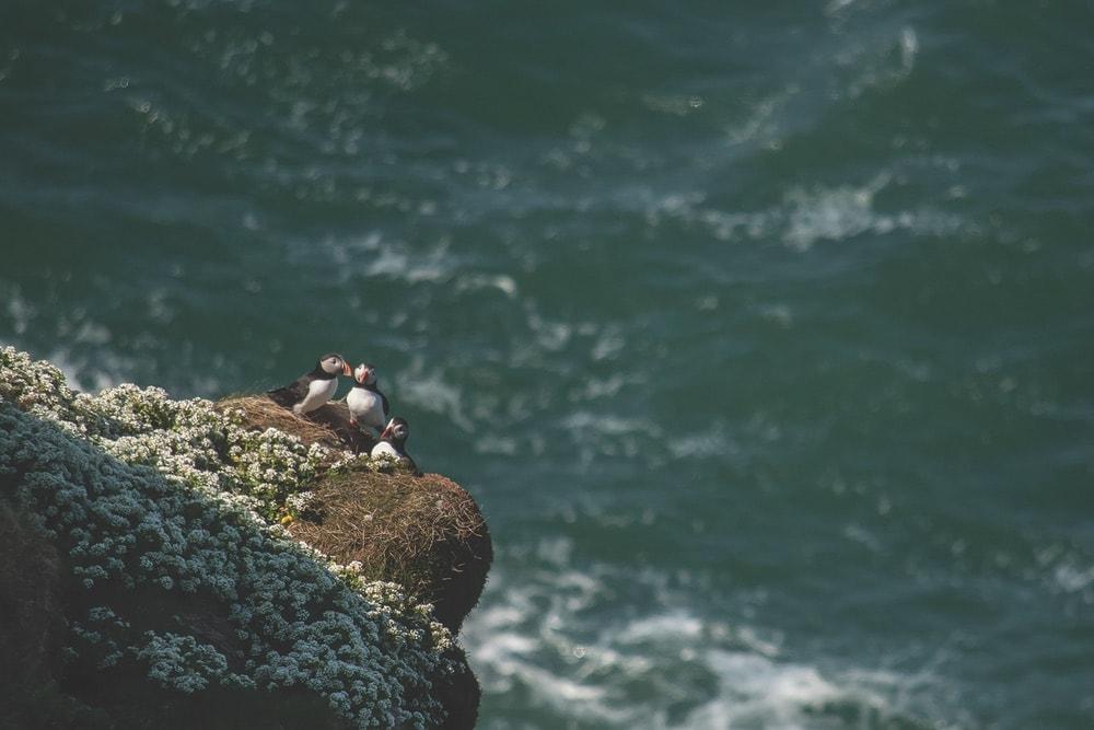Connemara Life, Connemara, Landscapes, Puffins