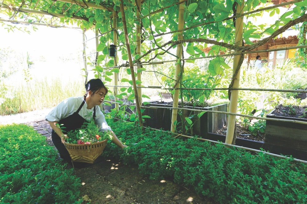 Sustainable Lifestyle in Thailand; Koh Samui; Six Senses Samui; garden; produce