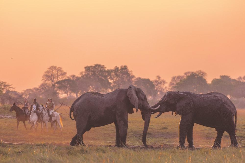 African Horseback Safaris VIE Magazine Destination Travel 2018 Cest la VIE