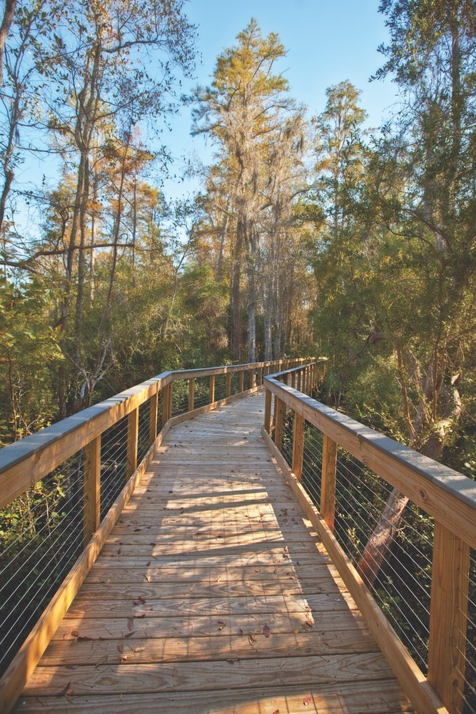 Wooden boardwalk in between the trees at the Conservation Park in Panama City Beach, Florida