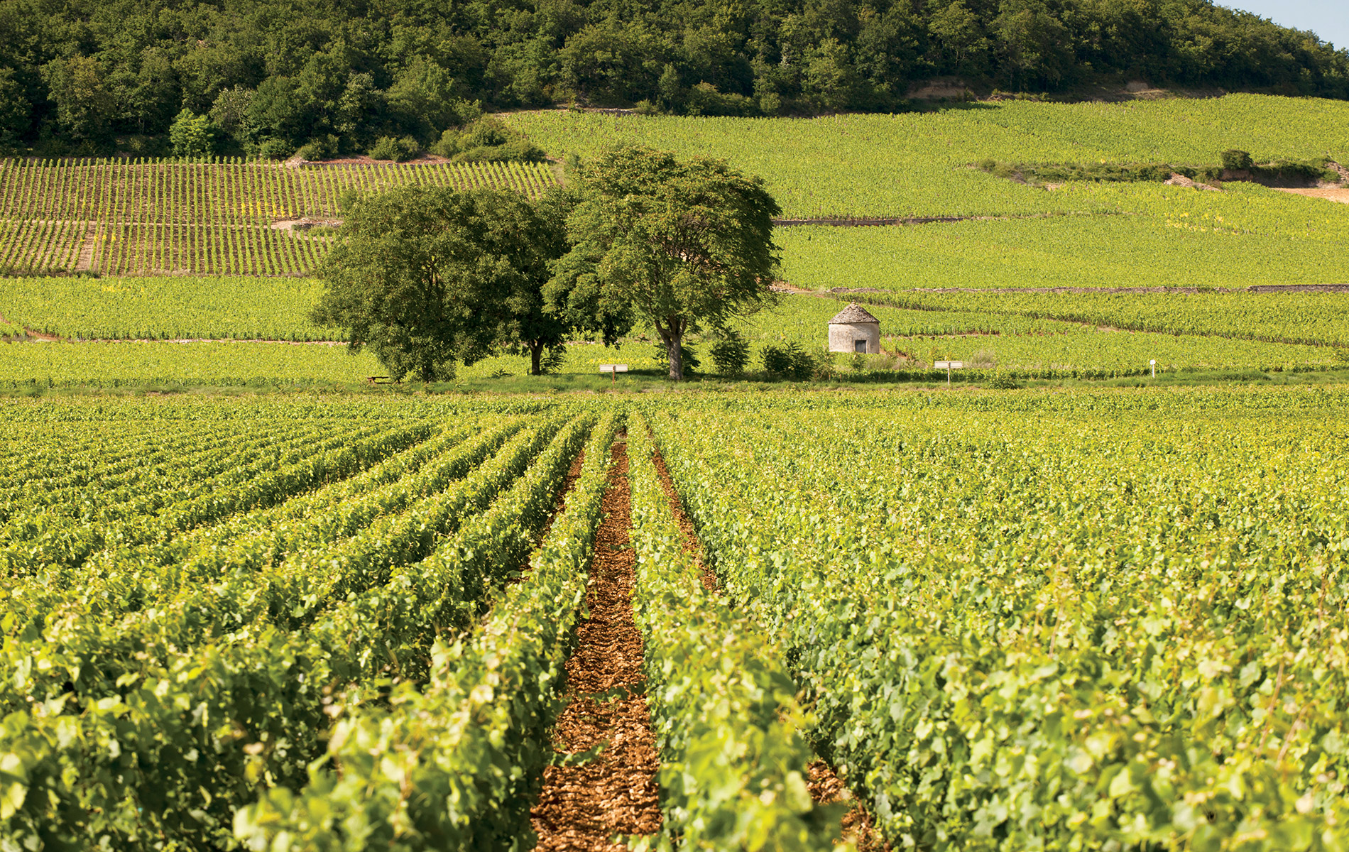 Domaine de Cromey is a picturesque winery and château located in the scenic heart of Burgundy, France.