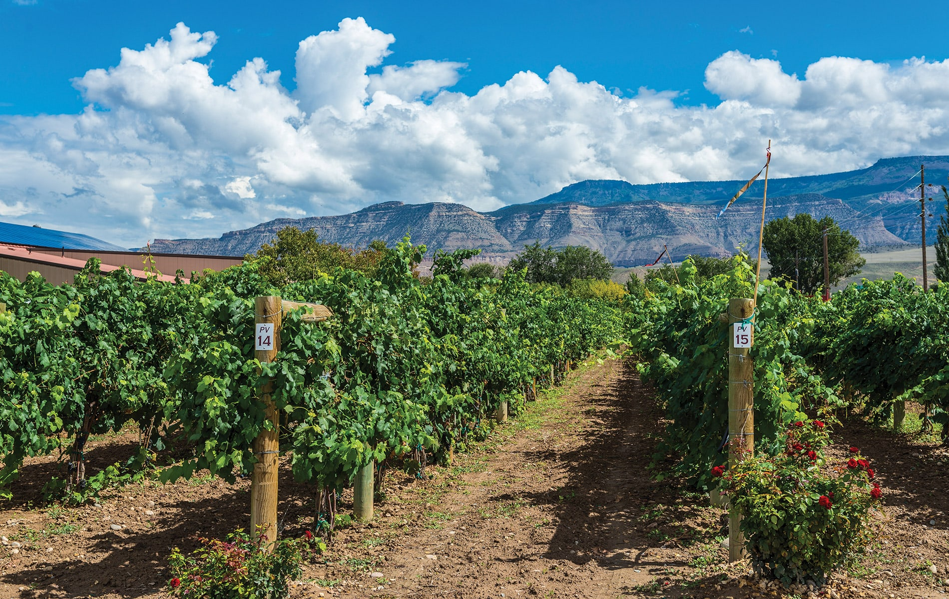 Warm days, cool nights, and high altitude contribute to the high quality of grapes grown in the Grand Valley region in western Colorado.