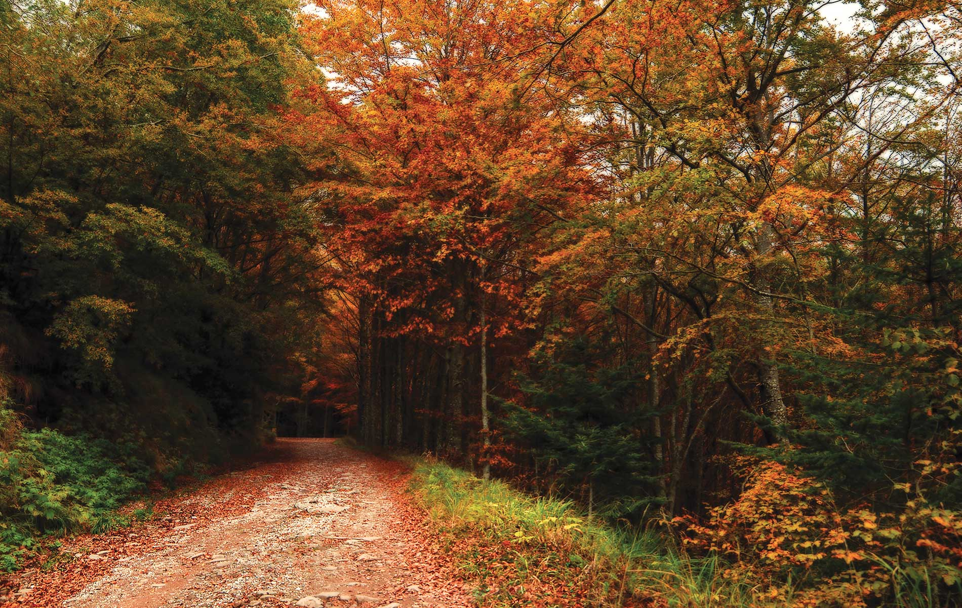 A autumn forest trail near the Marriott Renaissance Tuscany full of green and orange leafed trees