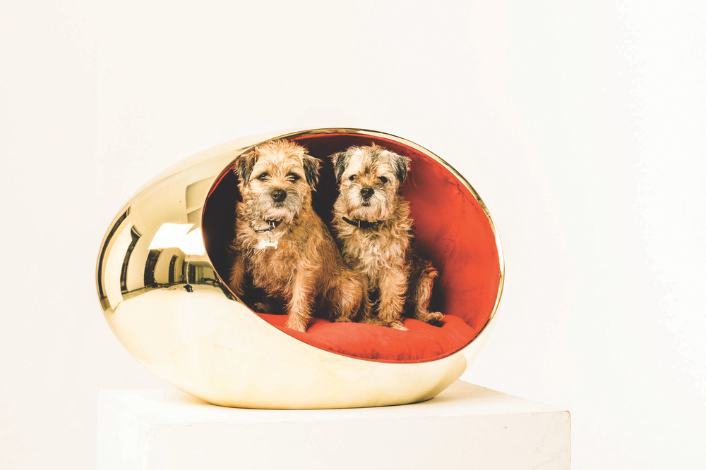 Two border terriers pose in the glamorous kennel