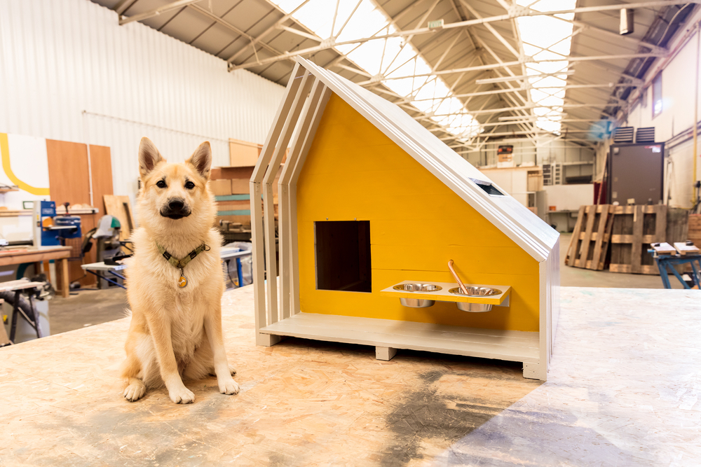A dog outside his modern doghouse
