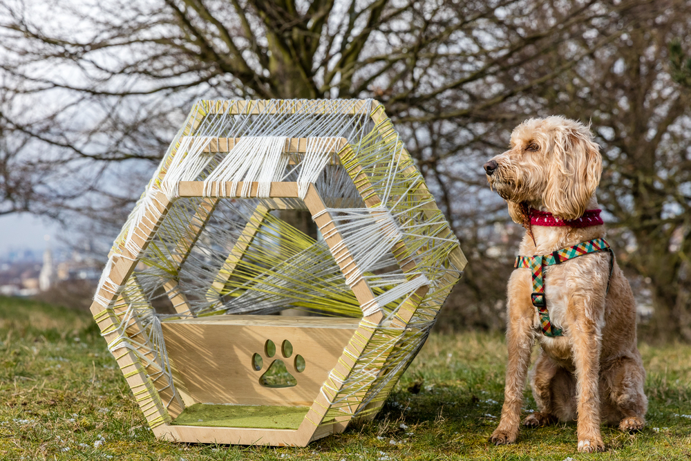 A dog posing in front of his modern dog house