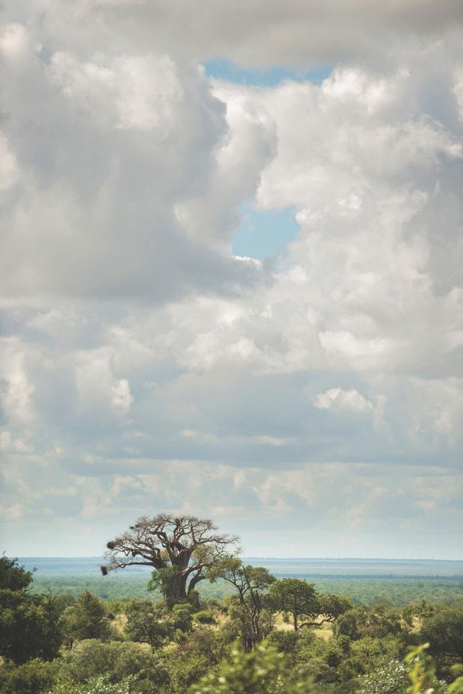 african safari photo by mark furniss