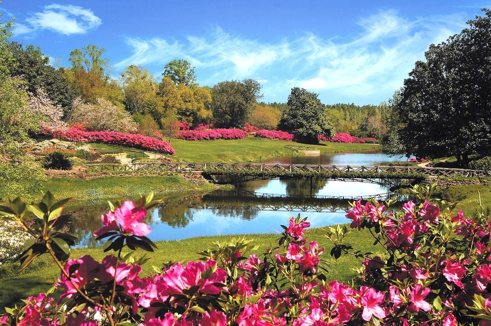 Located a short drive south of Mobile's city center, Bellingrath Gardens is a beautiful and impressive landscape of both formal and natural features.