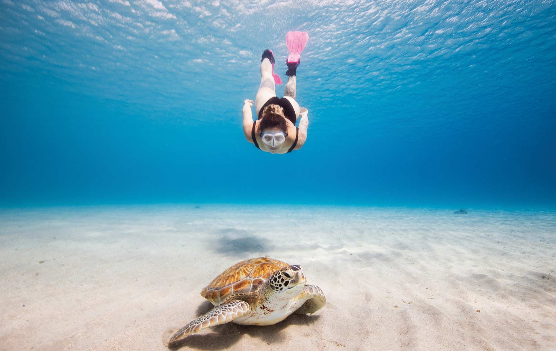 A snorkeler swims with a green sea turtle at Playa Piscado off the northwest point of Curaçao