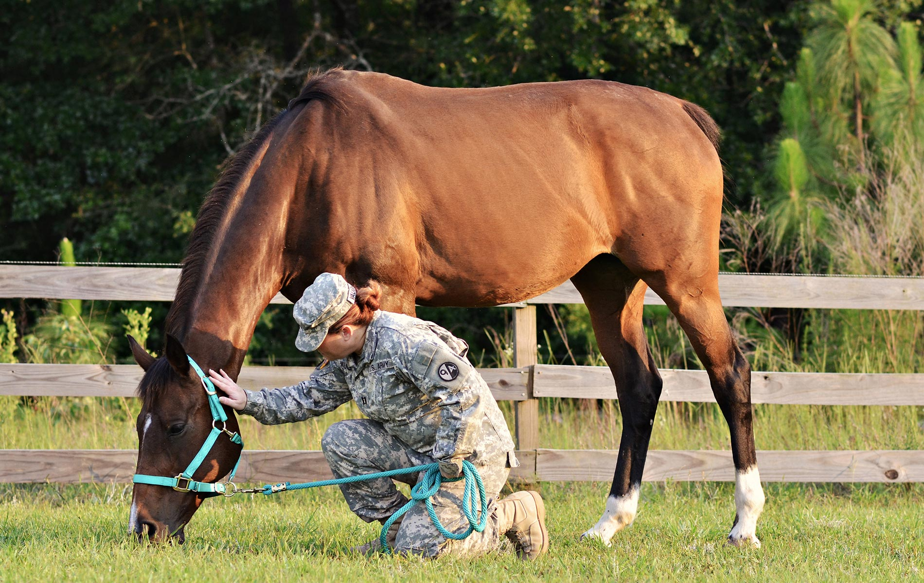 Healing Hoof Steps offers equine therapy programs for veterans, at-risk youth, couples, and all other types of people in need of mental and emotional support.