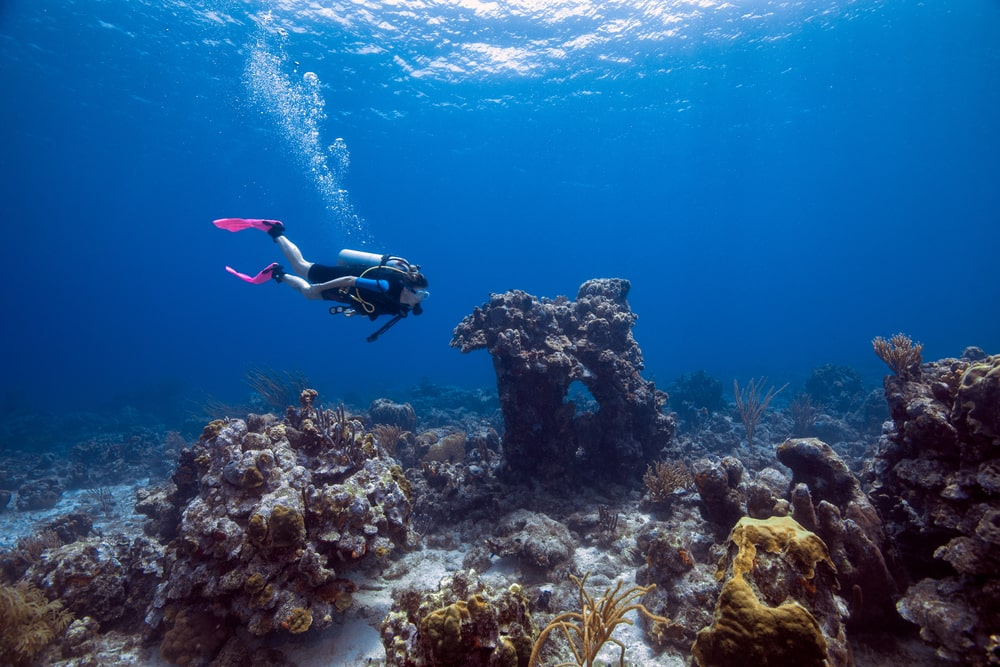 A diver explores the underwater ecosystem at Paradise dive site.