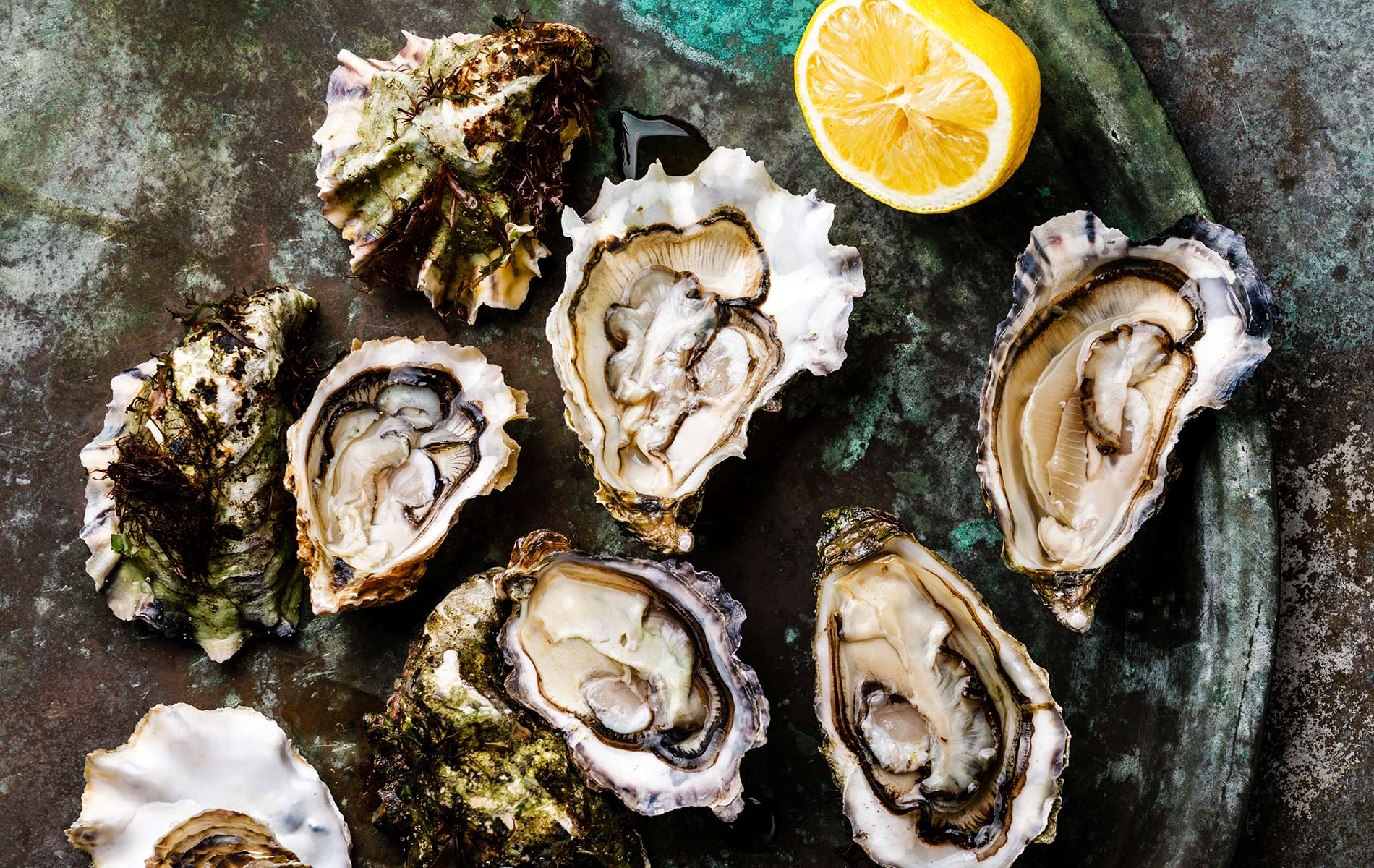 Open fresh Oysters with lemon and knife on dark background copy space